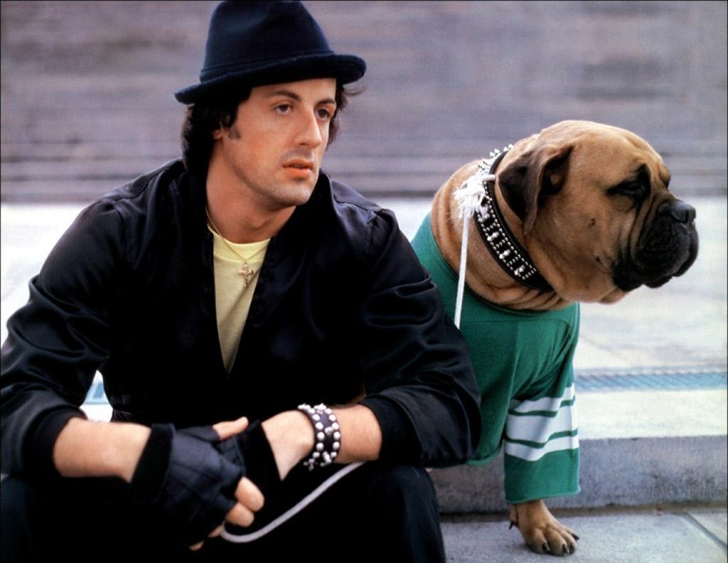 rocky-perro-aniversario-cuarenta-pizzacinema